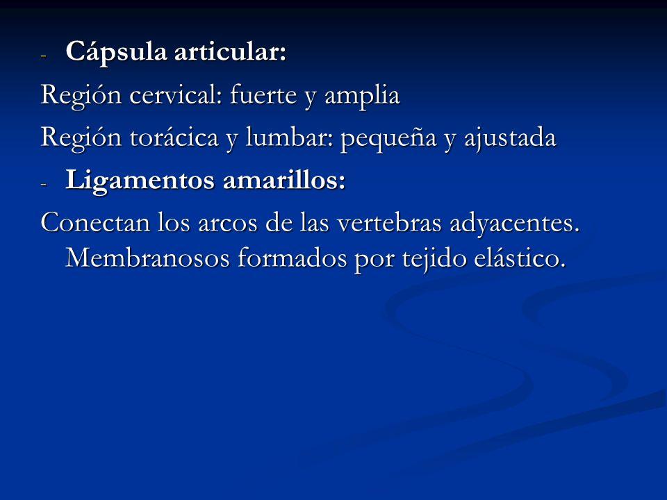 - Cápsula articular: Región cervical: fuerte y amplia Región torácica y lumbar: pequeña y ajustada - Ligamentos amarillos: Conectan los arcos de las v