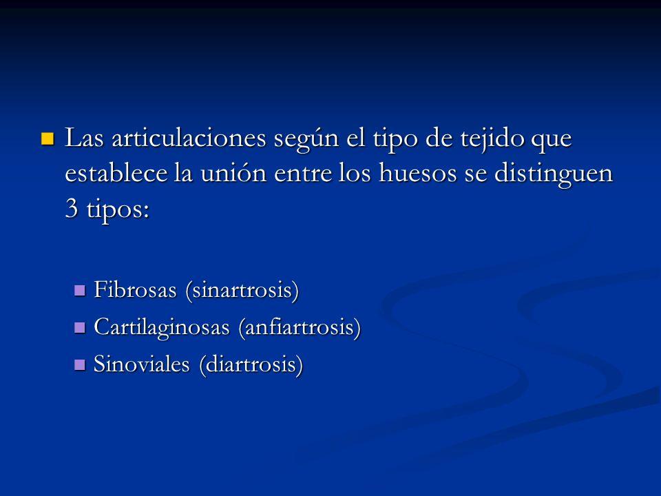 Las articulaciones según el tipo de tejido que establece la unión entre los huesos se distinguen 3 tipos: Las articulaciones según el tipo de tejido q
