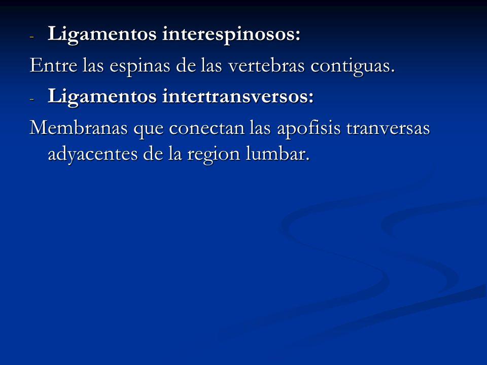 - Ligamentos interespinosos: Entre las espinas de las vertebras contiguas. - Ligamentos intertransversos: Membranas que conectan las apofisis tranvers