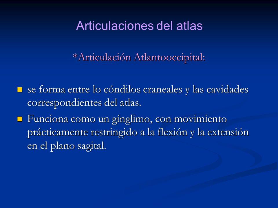 *Articulación Atlantooccipital: se forma entre lo cóndilos craneales y las cavidades correspondientes del atlas. se forma entre lo cóndilos craneales