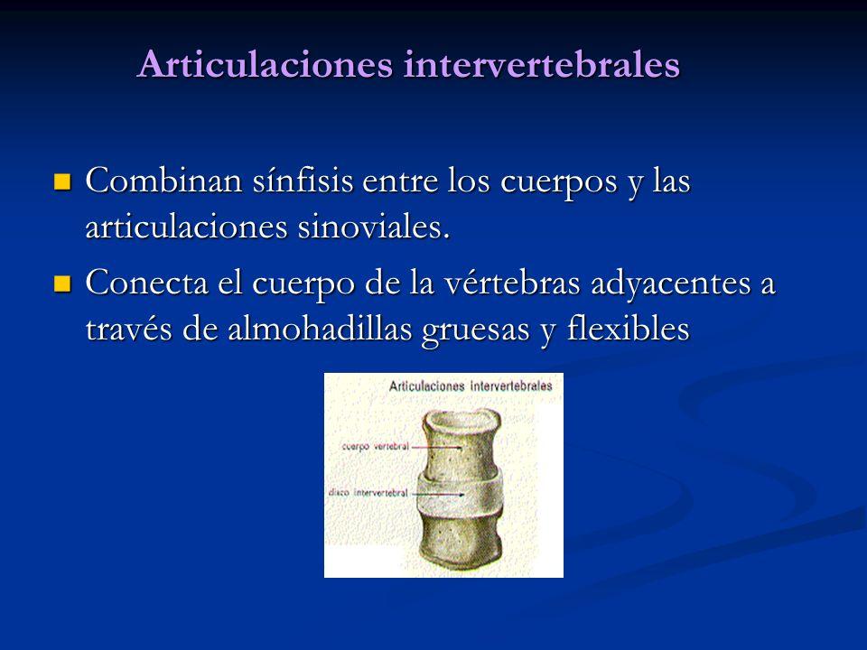 Articulaciones intervertebrales Combinan sínfisis entre los cuerpos y las articulaciones sinoviales. Combinan sínfisis entre los cuerpos y las articul