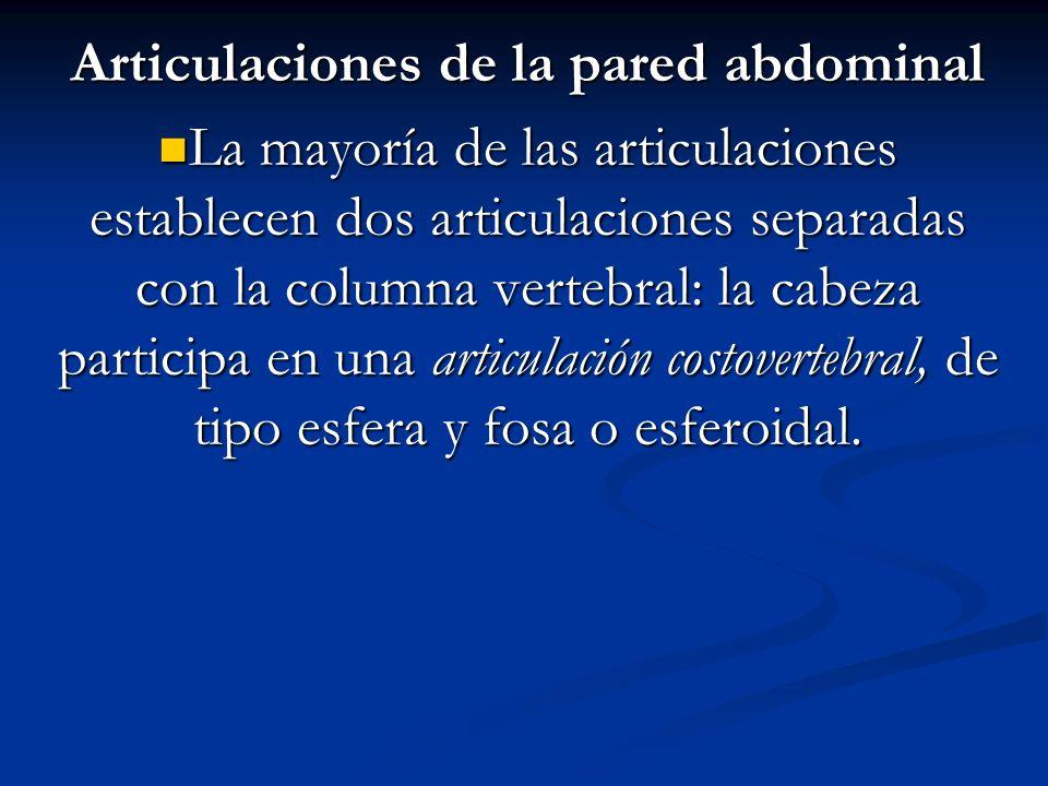 Articulaciones de la pared abdominal La mayoría de las articulaciones establecen dos articulaciones separadas con la columna vertebral: la cabeza part