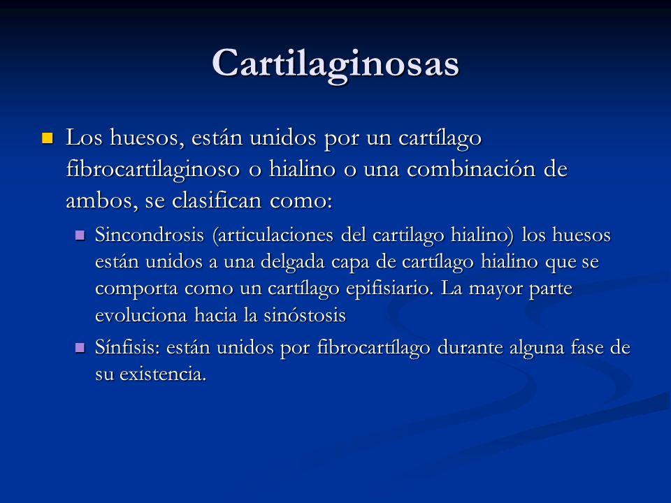 Cartilaginosas Los huesos, están unidos por un cartílago fibrocartilaginoso o hialino o una combinación de ambos, se clasifican como: Los huesos, está