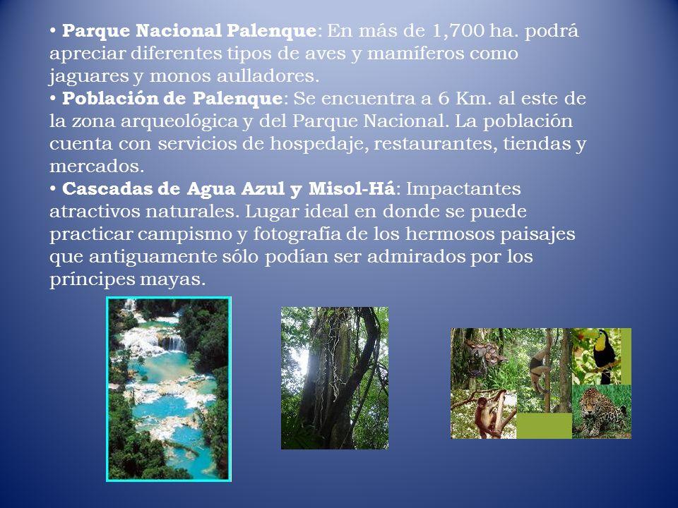 Parque Nacional Palenque : En más de 1,700 ha. podrá apreciar diferentes tipos de aves y mamíferos como jaguares y monos aulladores. Población de Pale