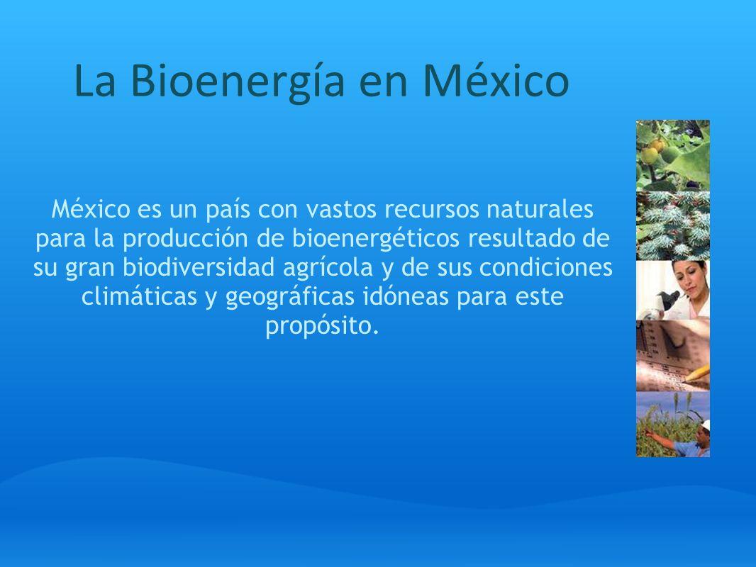 La Bioenergía en México México es un país con vastos recursos naturales para la producción de bioenergéticos resultado de su gran biodiversidad agríco