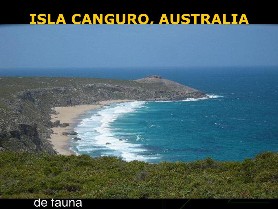 ISLA CANGURO, AUSTRALIA la tercera isla más grande de Australia. La isla atrae anualmente a más de 140.000 visitantes que buscan en ella el último par