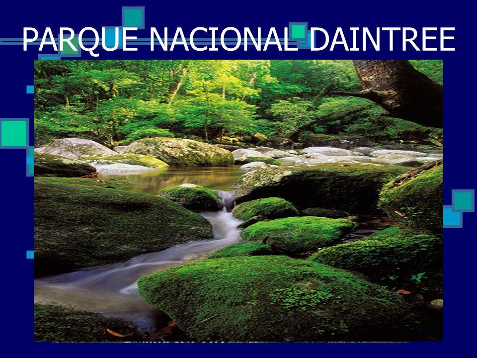PARQUE NACIONAL DAINTREE Impresionante El Parque Nacional Daintree, 70 millas al norte de Cairns, es un patrimonio de la UNESCO. El parque nacional se