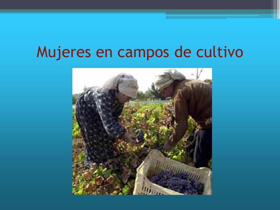Mujeres en campos de cultivo