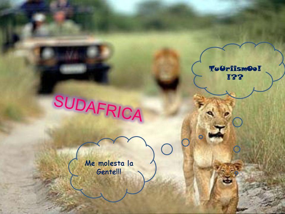 África es el continente con la Historia más importante Está considerado como el continente donde nacieron los seres humanos, Desde entonces varias han