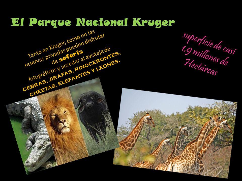 El Parque Nacional Kruger superficie de casi 1,9 millones de Hectáreas Tanto en Kruger, como en las reservas privadas pueden disfrutar de safaris fotográficos y acceder al avistaje de cebras, jirafas, rinocerontes, cheetas, elefantes y leones.