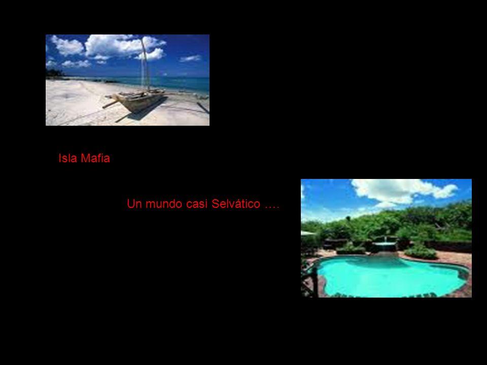 Isla Mafia Un mundo casi Selvático ….