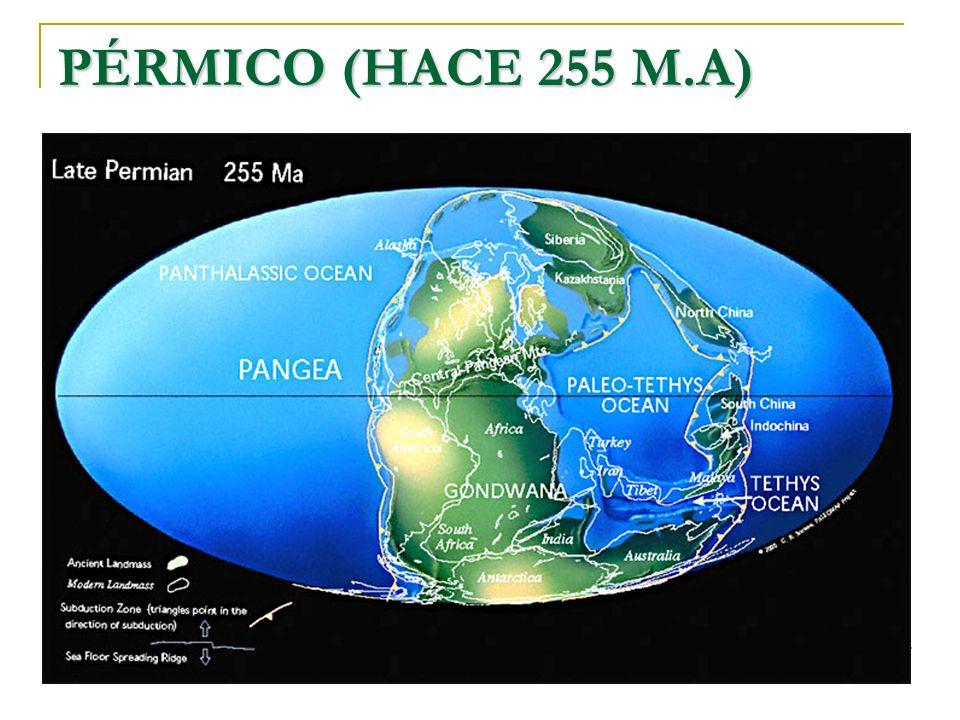 PÉRMICO (HACE 255 M.A)