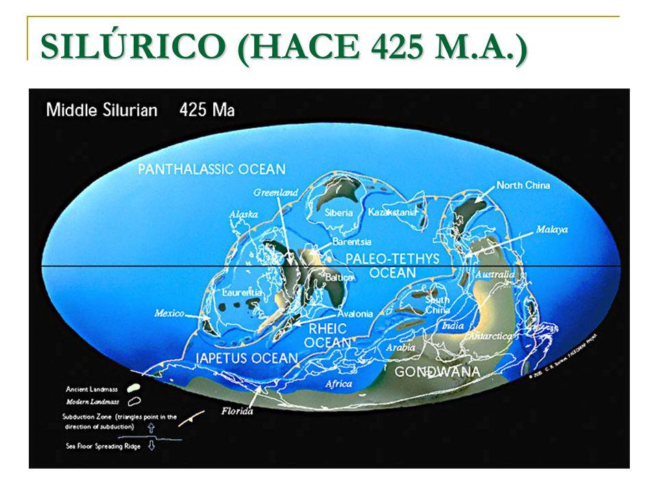 SILÚRICO (HACE 425 M.A.)