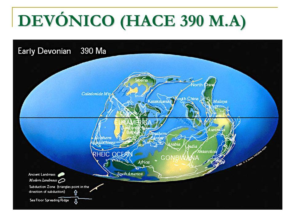 DEVÓNICO (HACE 390 M.A)