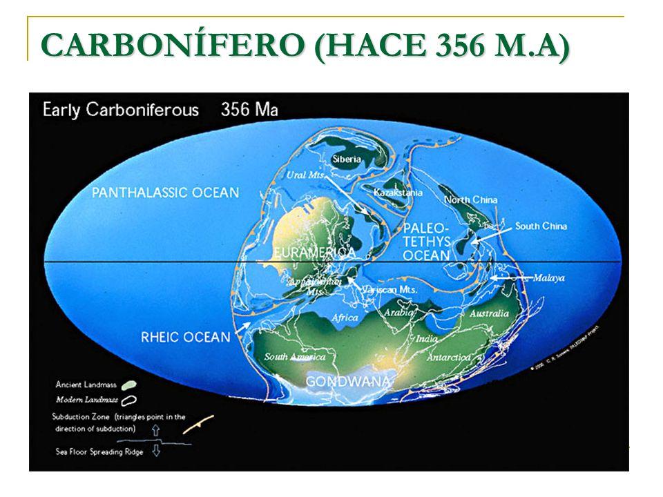 CARBONÍFERO (HACE 356 M.A)