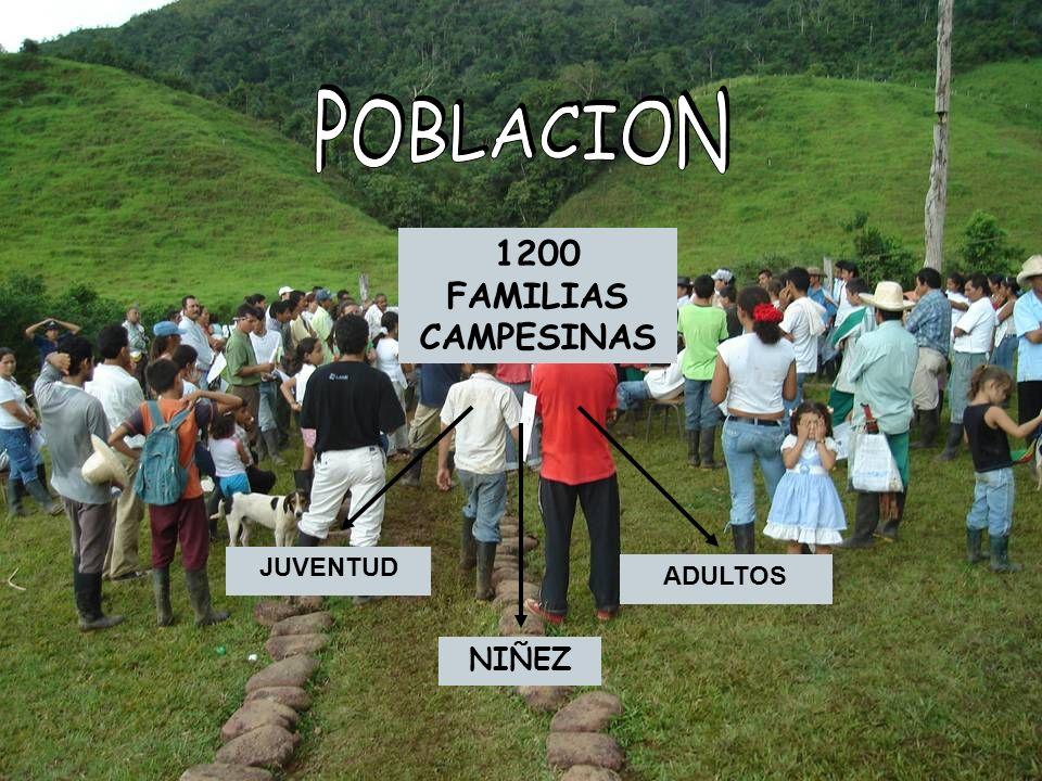 JUVENTUD ADULTOS NIÑEZ 1200 FAMILIAS CAMPESINAS