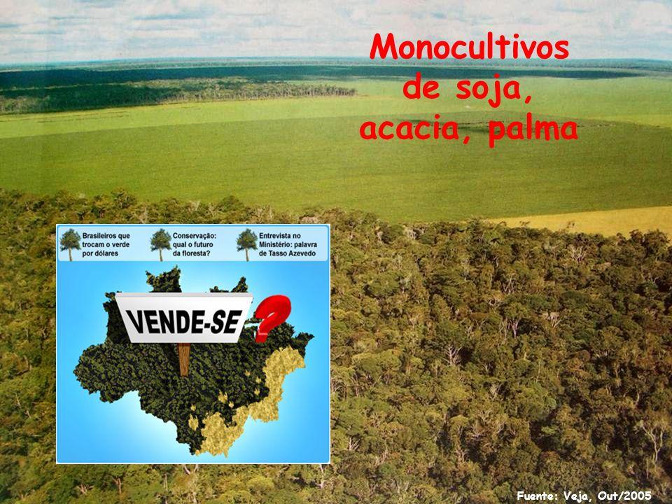 Explotación irracional de los recursos naturales: concesiones forestales y madereras
