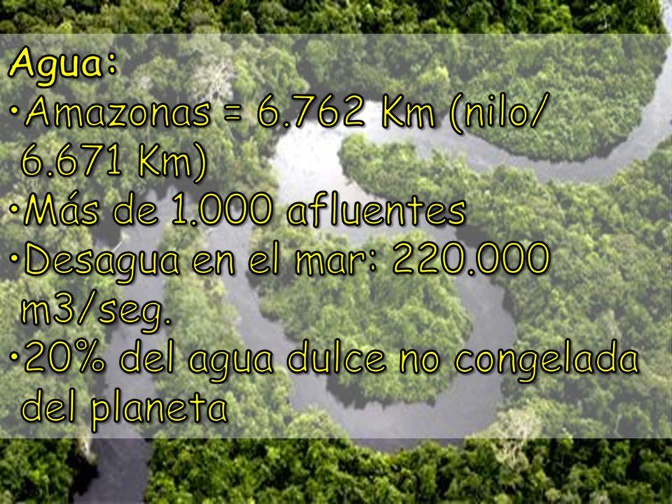 Extensión de la Amazônia: 3.400 Km de este a oeste. 2.000 km de norte a sul.