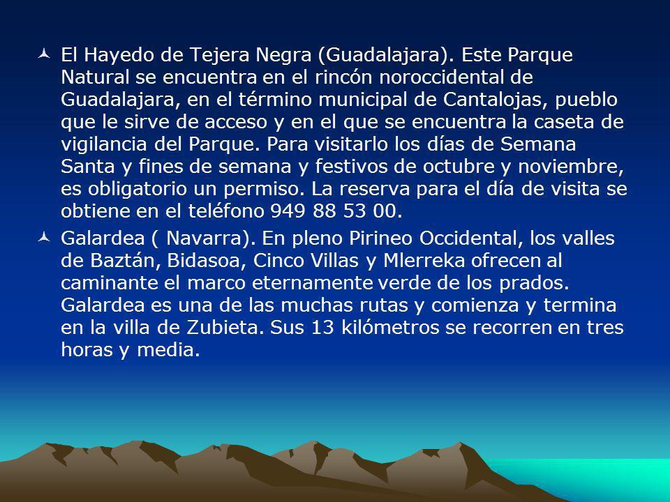 El Hayedo de Tejera Negra (Guadalajara). Este Parque Natural se encuentra en el rincón noroccidental de Guadalajara, en el término municipal de Cantal