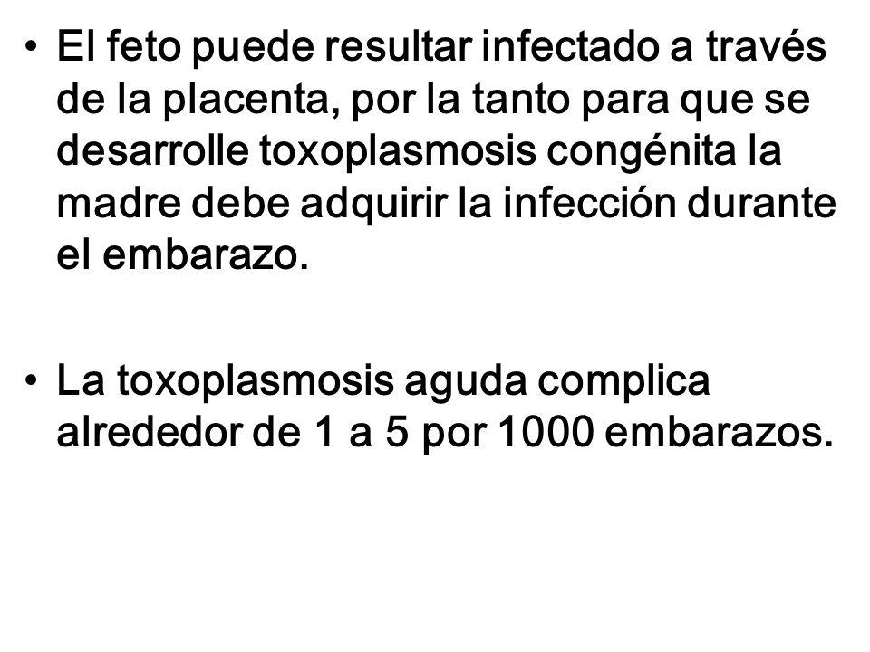 El feto puede resultar infectado a través de la placenta, por la tanto para que se desarrolle toxoplasmosis congénita la madre debe adquirir la infecc