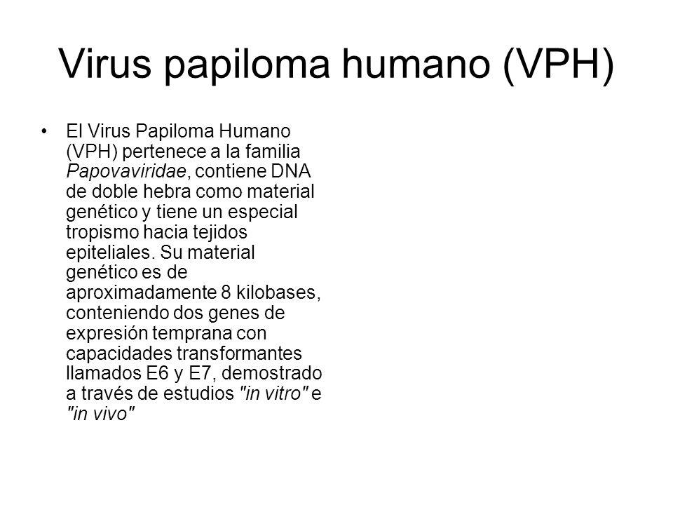 Virus papiloma humano (VPH) El Virus Papiloma Humano (VPH) pertenece a la familia Papovaviridae, contiene DNA de doble hebra como material genético y