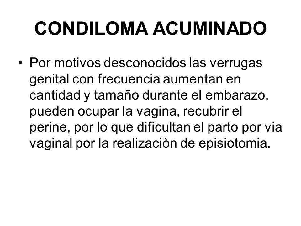CONDILOMA ACUMINADO Por motivos desconocidos las verrugas genital con frecuencia aumentan en cantidad y tamaño durante el embarazo, pueden ocupar la v