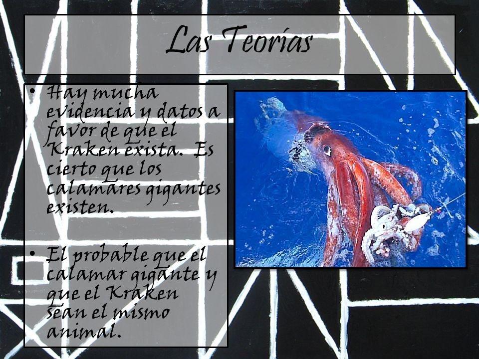 Las Teorías Hay mucha evidencia y datos a favor de que el Kraken exista. Es cierto que los calamares gigantes existen. El probable que el calamar giga