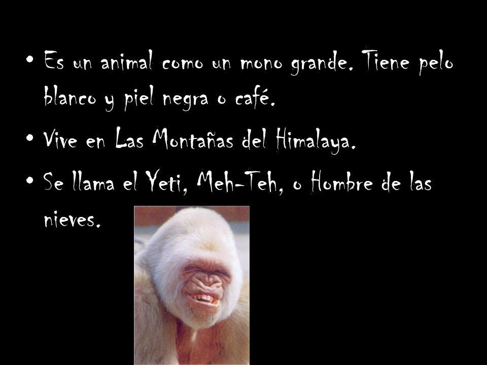 Es un animal como un mono grande. Tiene pelo blanco y piel negra o café. Vive en Las Montañas del Himalaya. Se llama el Yeti, Meh-Teh, o Hombre de las