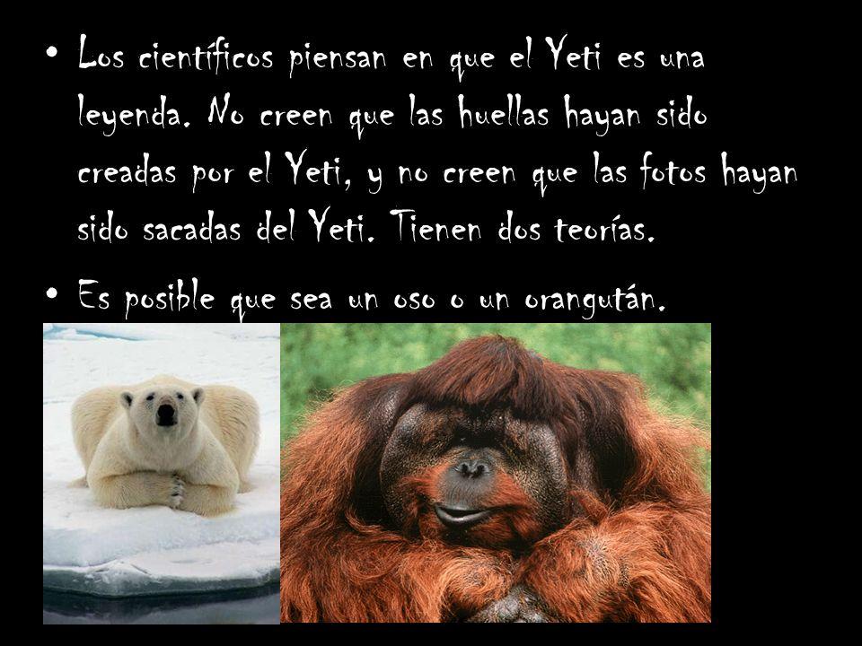 Los científicos piensan en que el Yeti es una leyenda. No creen que las huellas hayan sido creadas por el Yeti, y no creen que las fotos hayan sido sa