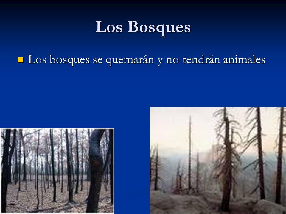 Los Bosques Los bosques se quemarán y no tendrán animales Los bosques se quemarán y no tendrán animales