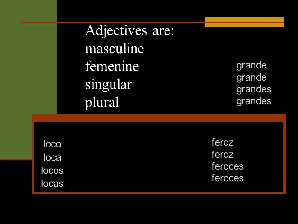 Adjectives are: masculine femenine singular plural loco loca locos locas grande grandes feroz feroces