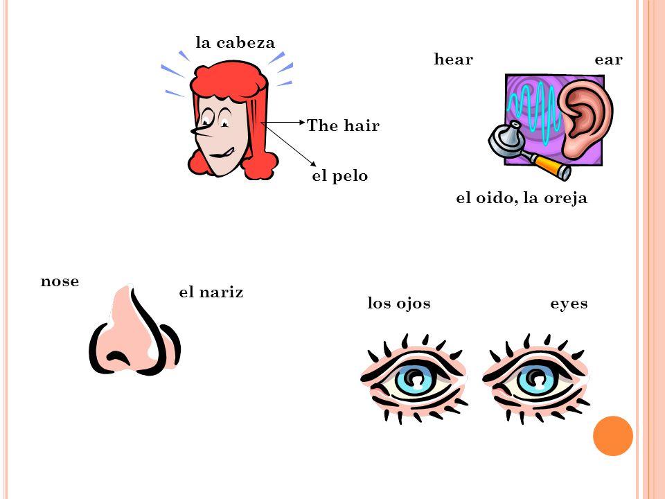los ojos el oido, la oreja el nariz ear nose hear la cabeza eyes The hair el pelo