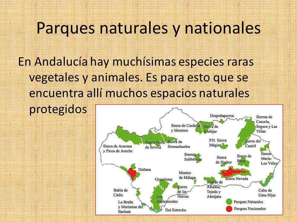 Parques naturales y nationales En Andalucía hay muchísimas especies raras vegetales y animales.