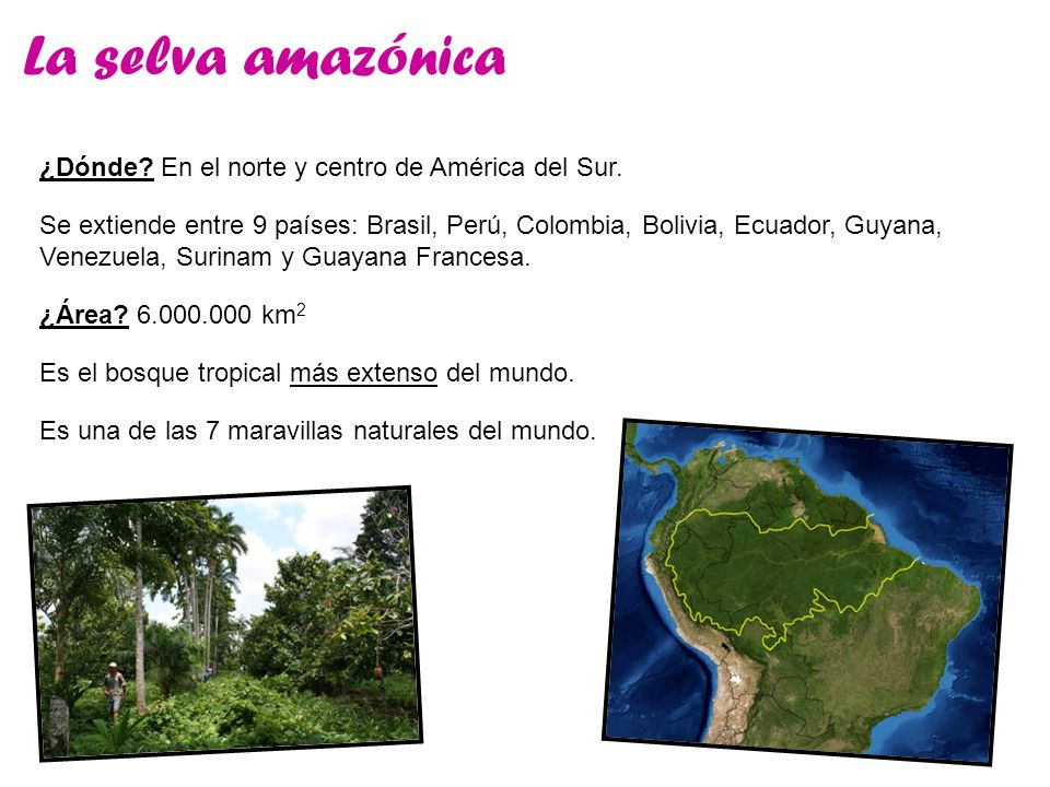 La selva amazónica Es el bosque tropical más extenso del mundo. ¿Dónde? En el norte y centro de América del Sur. ¿Área? 6.000.000 km 2 Se extiende ent