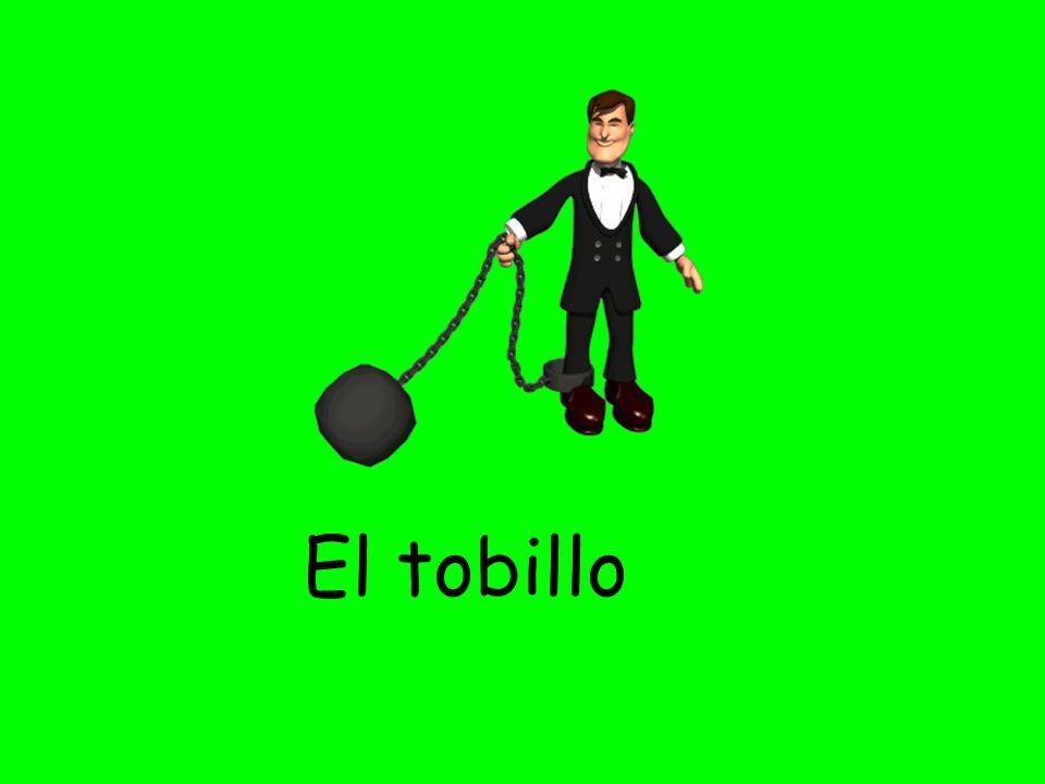 El tobillo