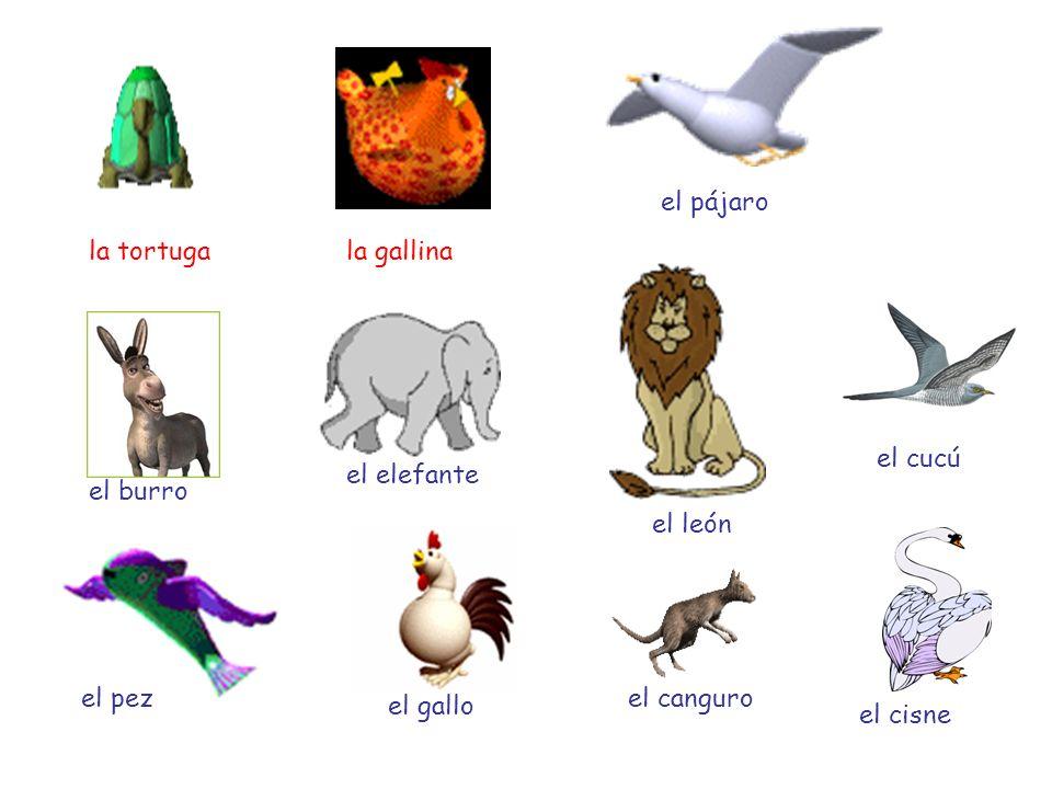 la tortuga la gallina el pájaro el burro el elefante el león el cucú el pez el gallo el canguro el cisne