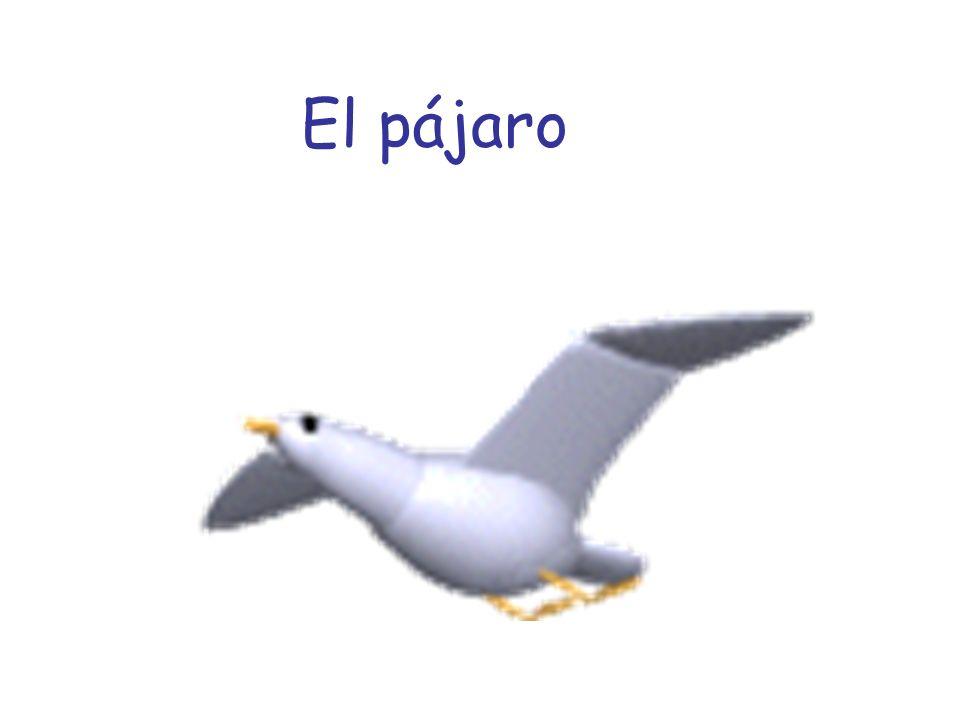 El pájaro ¡pío pío!