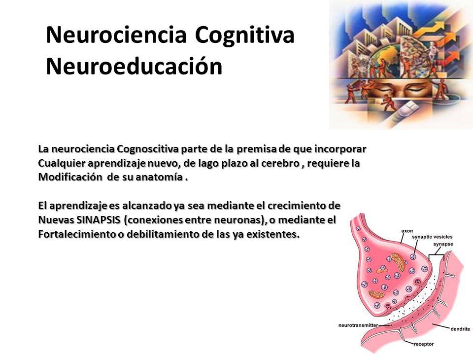 Neurociencia Cognitiva Neuroeducación La neurociencia Cognoscitiva parte de la premisa de que incorporar Cualquier aprendizaje nuevo, de lago plazo al