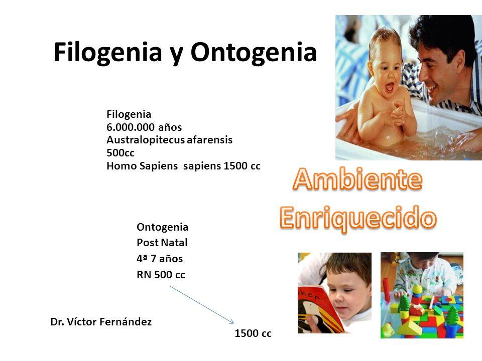 Filogenia y Ontogenia Filogenia 6.000.000 años Australopitecus afarensis 500cc Homo Sapiens sapiens 1500 cc Ontogenia Post Natal 4ª 7 años RN 500 cc 1