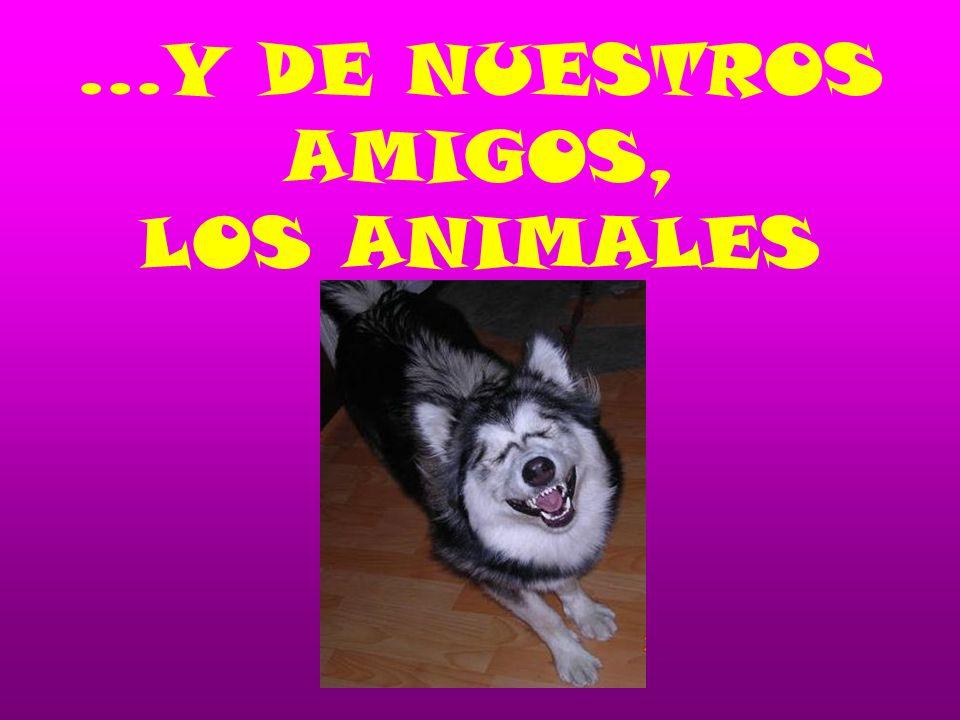 …Y DE NUESTROS AMIGOS, LOS ANIMALES