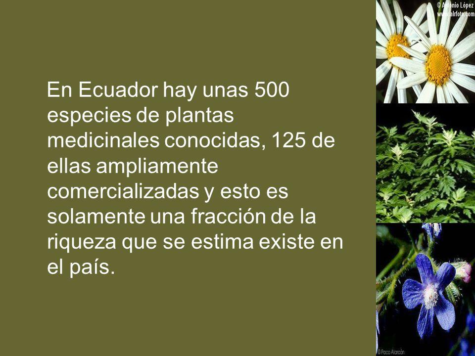 En Ecuador hay unas 500 especies de plantas medicinales conocidas, 125 de ellas ampliamente comercializadas y esto es solamente una fracción de la riq