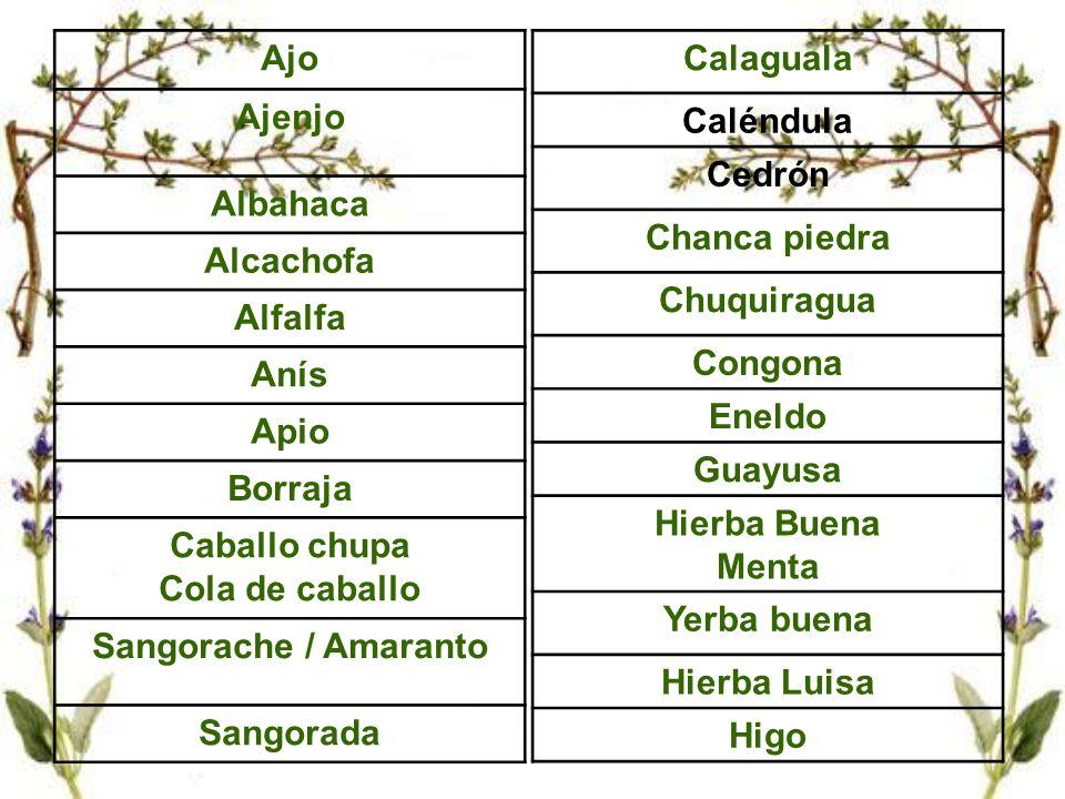 Ajo Ajenjo Albahaca Alcachofa Alfalfa Anís Apio Borraja Caballo chupa Cola de caballo Sangorache / Amaranto Sangorada Calaguala Caléndula Cedrón Chanc