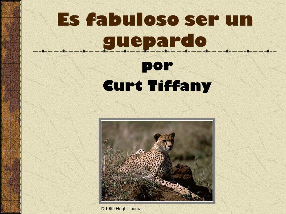 Es fabuloso ser un guepardo por Curt Tiffany © 1999 Hugh Thomas.