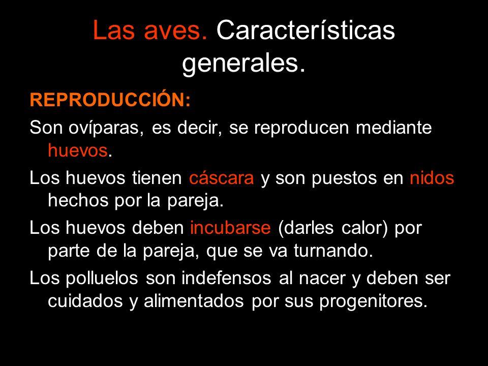 Las aves. Características generales. REPRODUCCIÓN: Son ovíparas, es decir, se reproducen mediante huevos. Los huevos tienen cáscara y son puestos en n