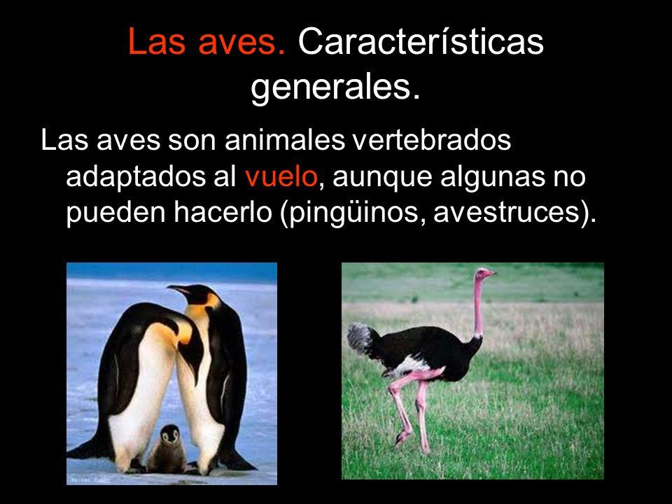 Las aves son animales vertebrados adaptados al vuelo, aunque algunas no pueden hacerlo (pingüinos, avestruces).