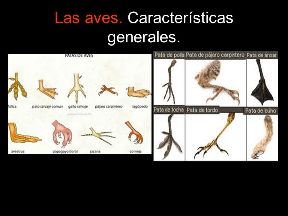 Las aves.Características generales.