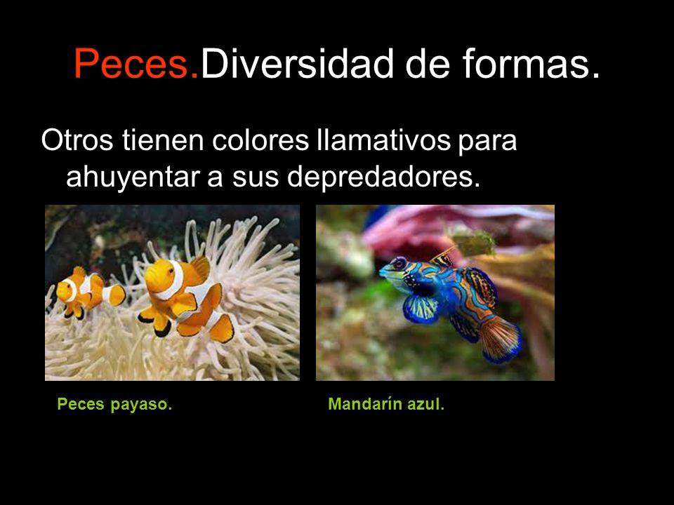 Peces.Diversidad de formas. Otros tienen colores llamativos para ahuyentar a sus depredadores. Peces payaso.Mandarín azul.
