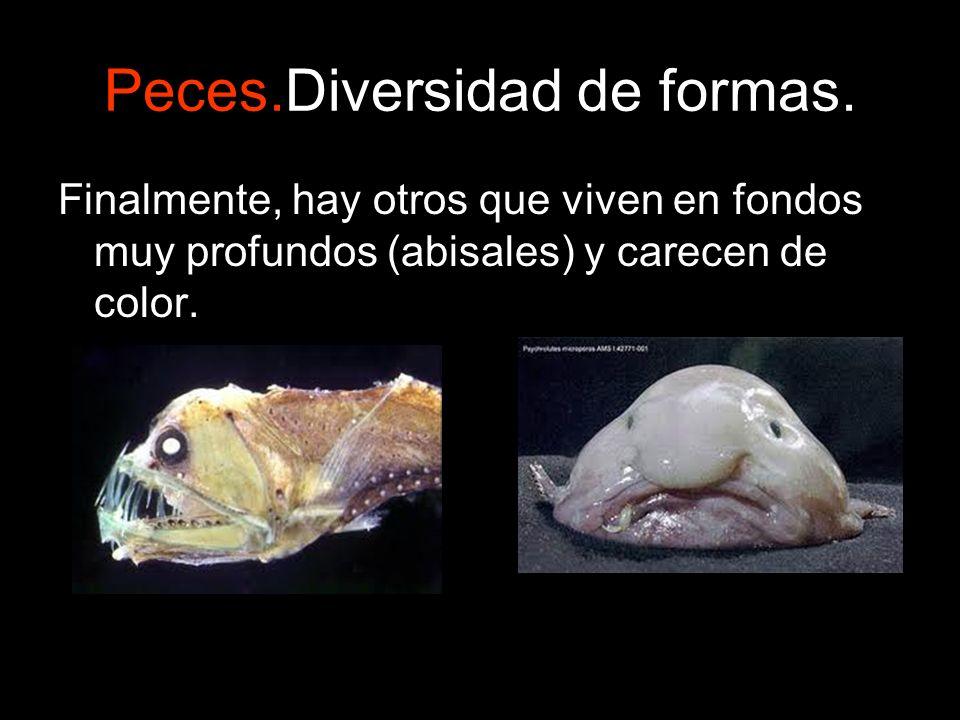 Peces.Diversidad de formas. Finalmente, hay otros que viven en fondos muy profundos (abisales) y carecen de color.