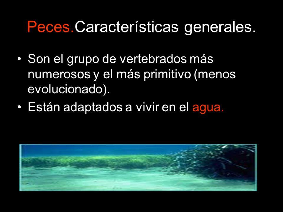 Peces.Características generales. Son el grupo de vertebrados más numerosos y el más primitivo (menos evolucionado). Están adaptados a vivir en el agua