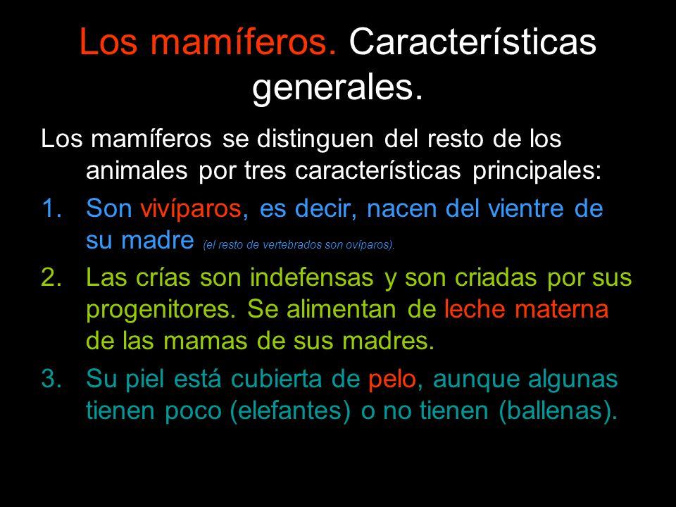 Los mamíferos. Características generales. Los mamíferos se distinguen del resto de los animales por tres características principales: 1.Son vivíparos,